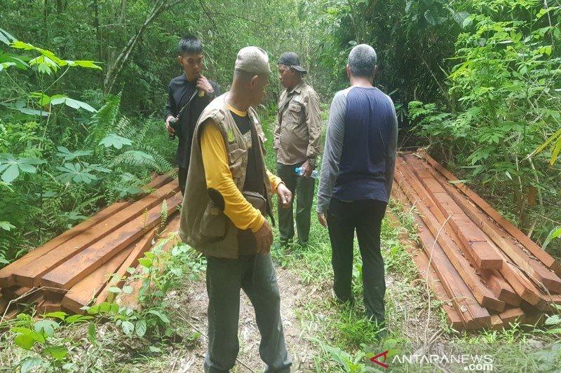 BKSDA Sultra amankan puluhan batang kayu bayam ilegal