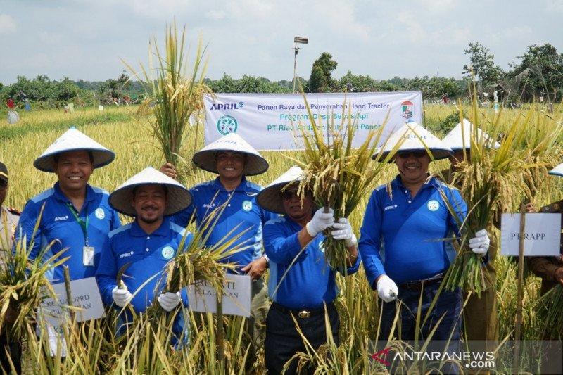 Bupati Pelalawan panen raya perdana di Desa Bebas Api Binaan RAPP
