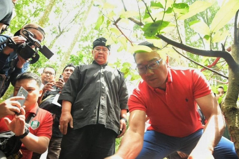 Emil ikut tanam 220.022 bibit pohon di Gerakan Leuweung Padjadjaran