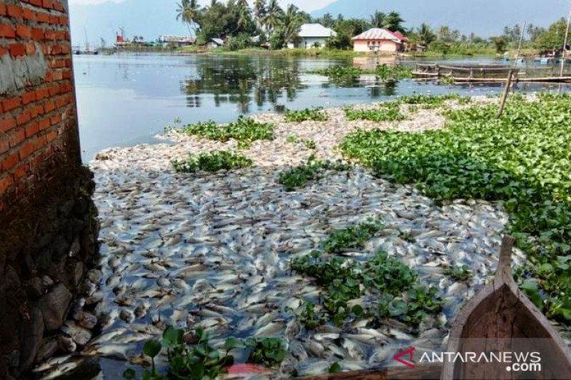 Mati massal ikan di Danau Maninjau menjadi 63 ton