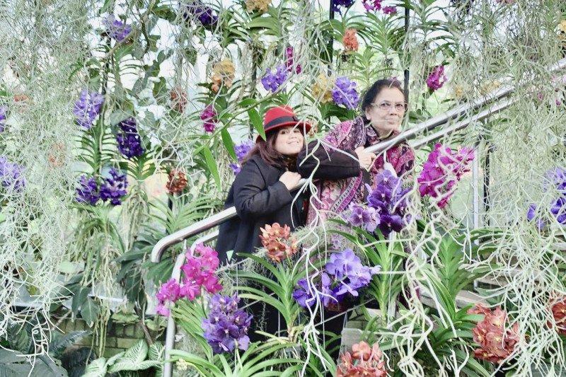 Pengunjung Royal Botanic Garden kagumi anggrek Indonesia