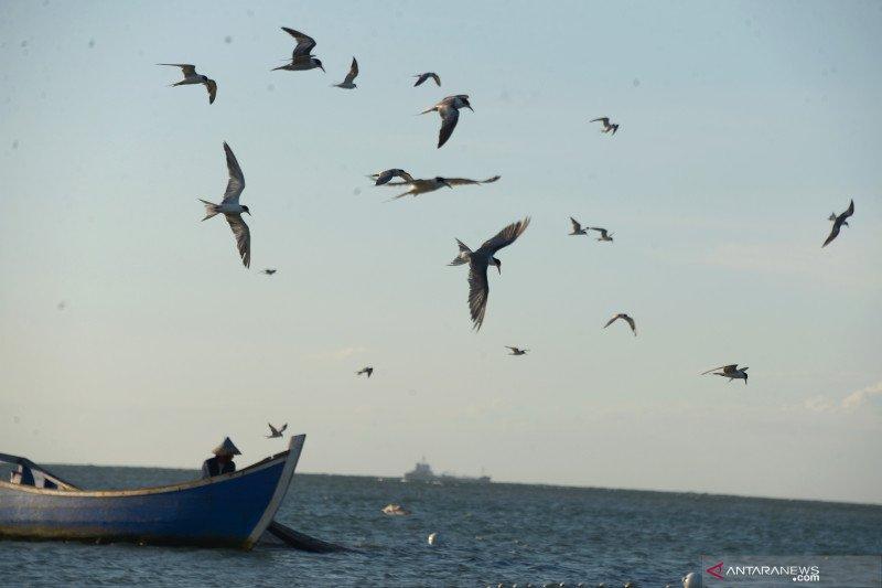 Ada 1.794 spesies  burung di Indonesia