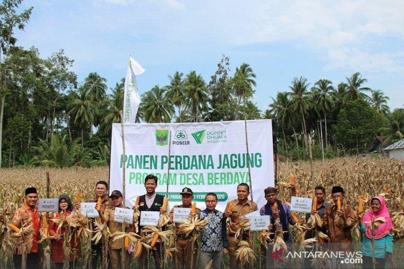 Panen pertama kebun jagung, DDS tingkatkan perekonomian duafa