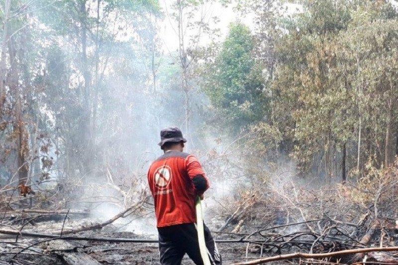 Tujuh hektare lahan di Siak terbakar