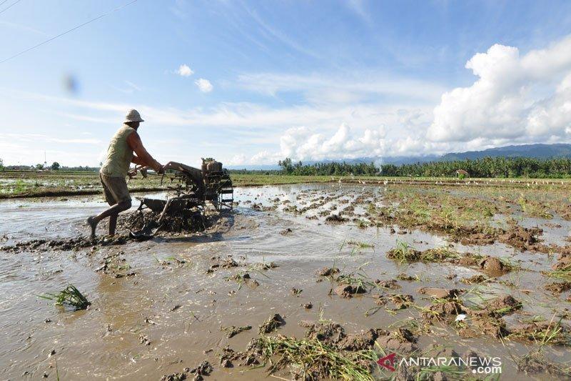 11 ribu petani Parigi Moutong menjadi nasabah kredit usaha rakyat