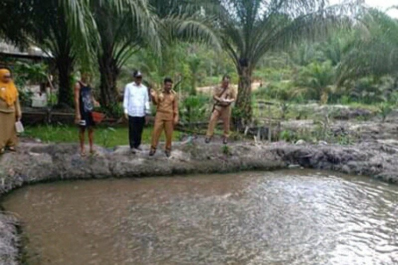 Tingkatkan perekonomian di Sukamara melalui budidaya ikan
