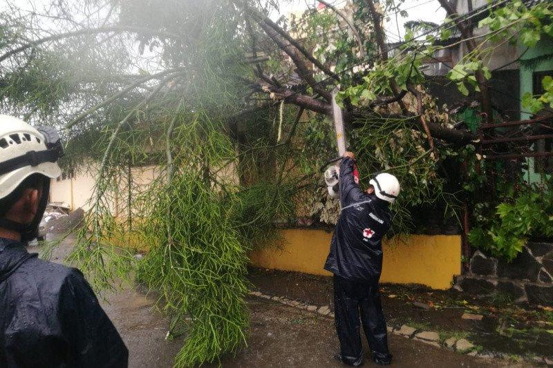 Puluhan pohon tumbang di DIY akibat hujan dan angin kencang