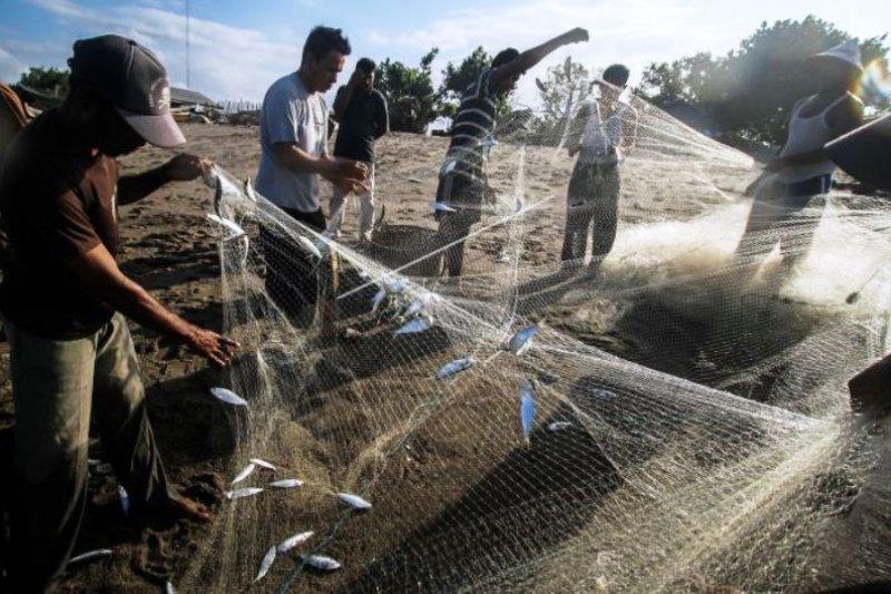 Tangkapan Ikan Nelayan di Saat Cuaca Buruk