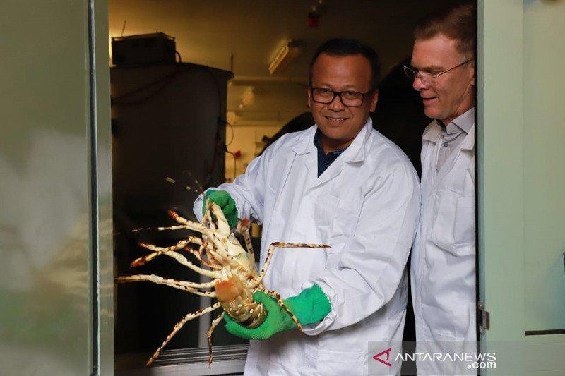 KKP-Universitas Tasmania kolaborasi pengembangan sumber daya kelautan