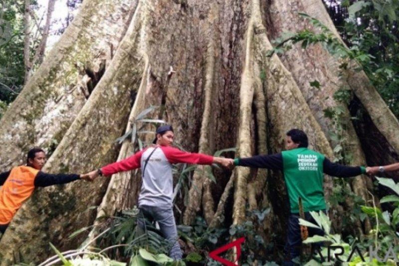 BNPB targetkan tanam 40.000 pohon raksasa di daerah rawan bencana