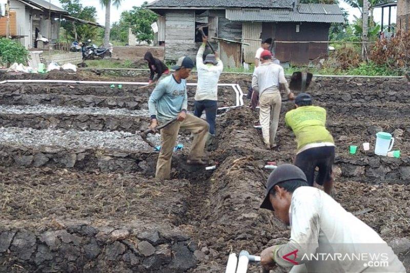 Demfarm di Desa Puntik Dalam ditarget panen 6 ton per hektare