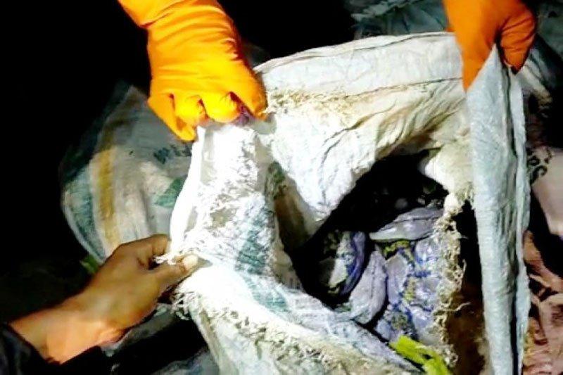 30 ular piton temuan warga Sampit dilepasliarkan di Lamandau