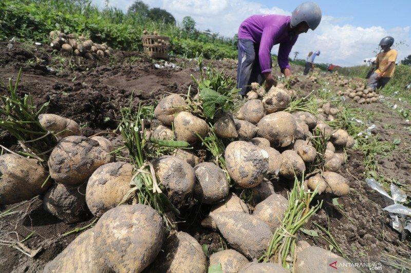 Hari buruh, KRKP nilai petani perlu diberikan akses lahan pertanian