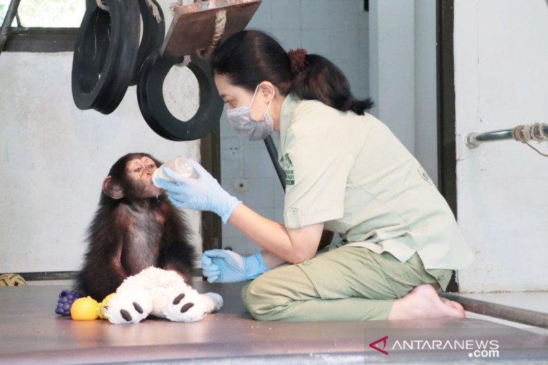 Satwa TSI Bogor tetap dapat perawatan meski tak terima pengunjung