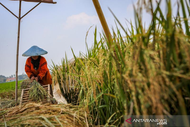 Kredit Usaha Rakyat pada sektor pertanian perlu untuk ditingkatkan