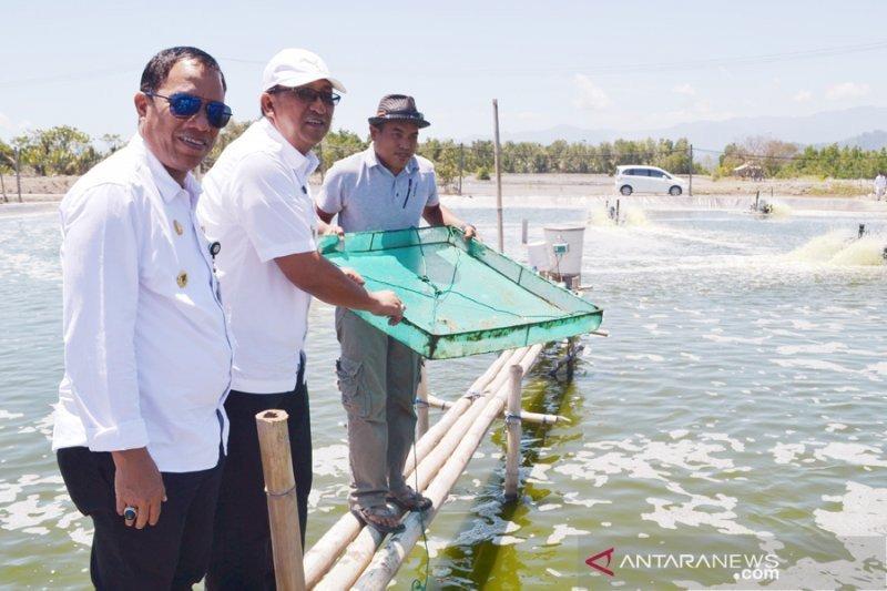 3 lokasi panen udang disiapkan untuk Hari Ikan Nasional Oktober 2020