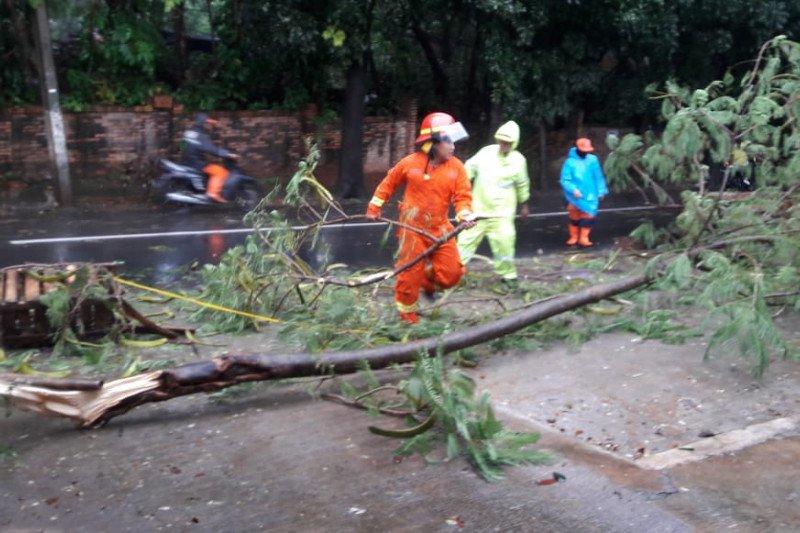 Dua pohon tumbang di Jaktim akibat hujan