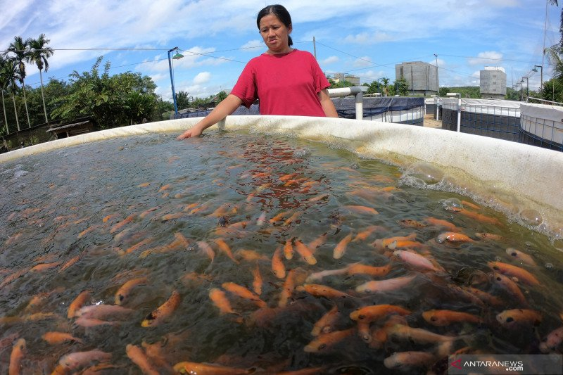 KKP salurkan bantuan 53,1 juta benih ikan, pastikan budidaya berjalan