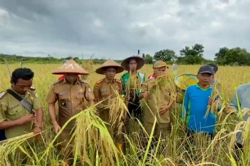 Pemda janji serap hasil panen petani Kotim