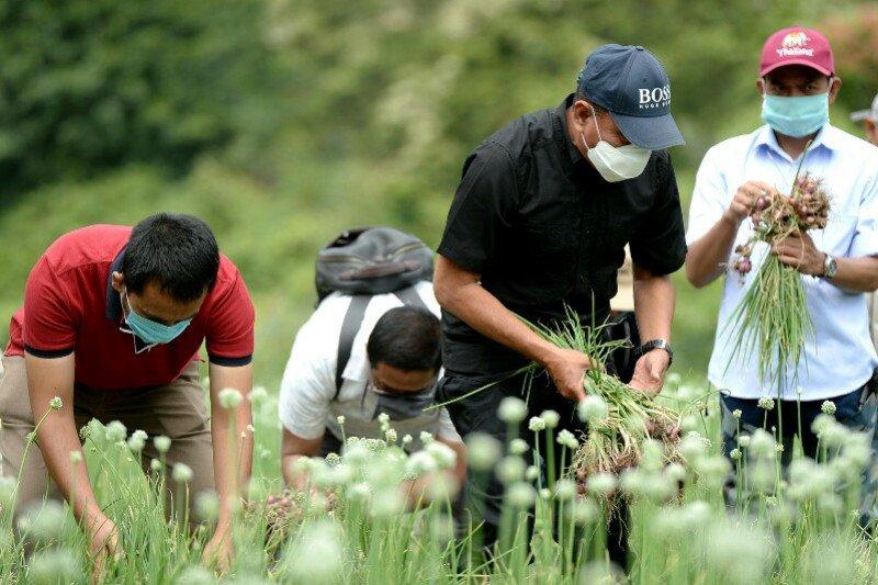 Petani di Deliserdang panen bawang di tengah pandemi COVID-19