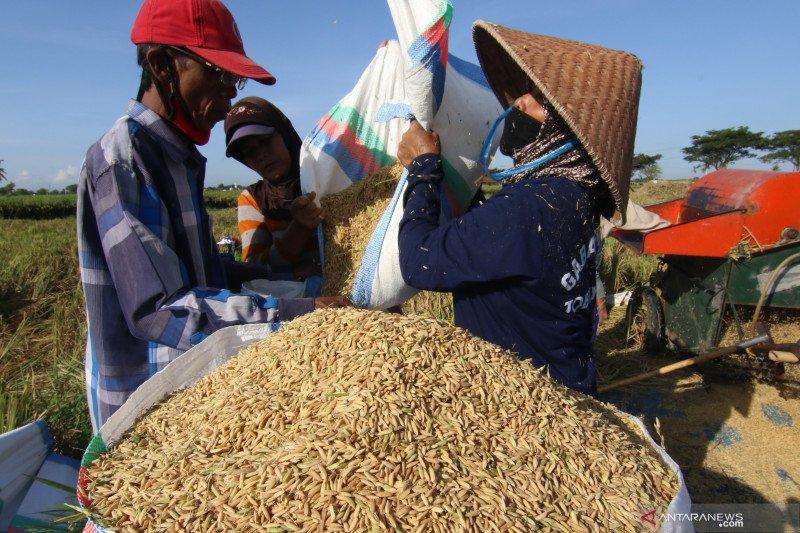 BPS: Harga beras sangat terjaga selama Juli, sehingga sumbang deflasi