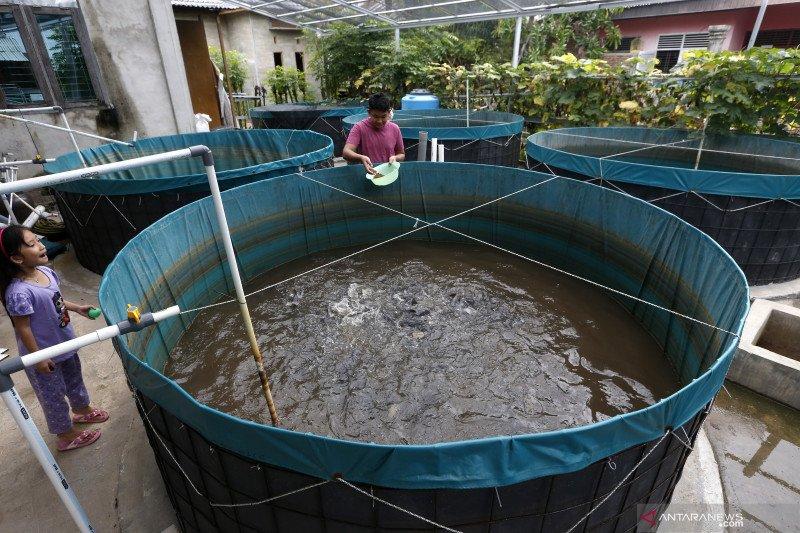 KKP-UNIDO selenggarakan pelatihan budidaya ikan tingkatkan kualitas