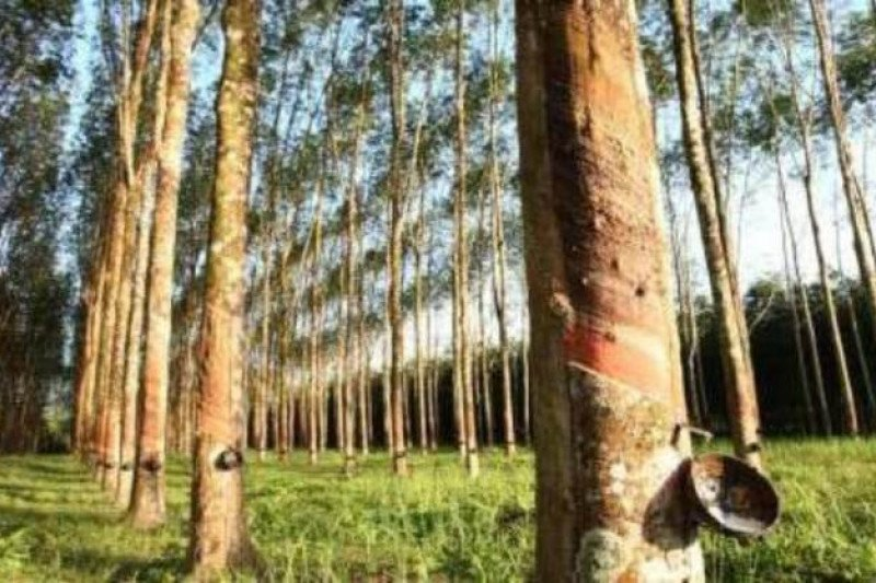 PUPR: Pembelian 10 ribu ton karet dari petani mitigasi dampak Covid-19