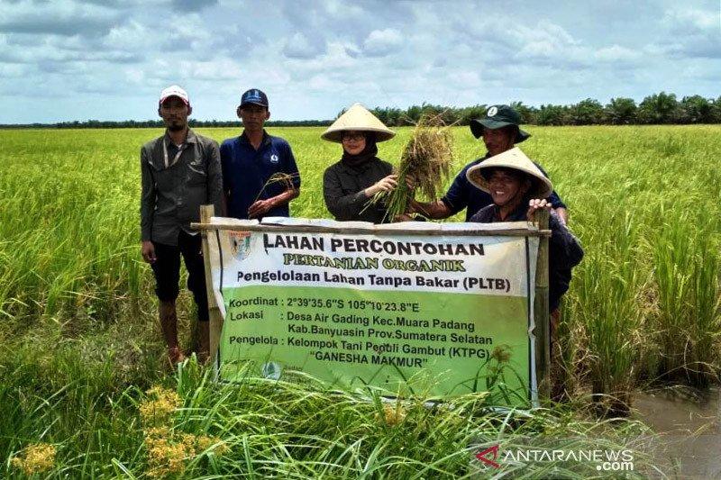 Akademisi: Rencana lahan gambut untuk pangan punya nilai ekonomis