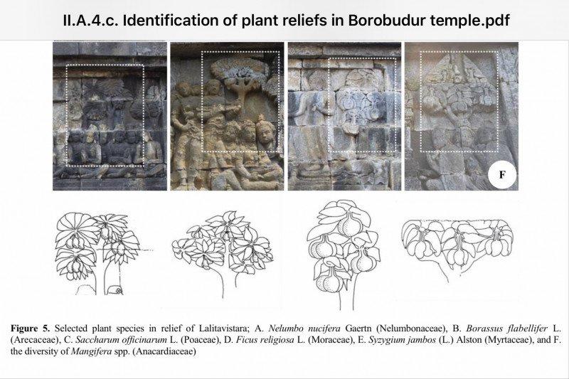 63 spesies tumbuhan era Jawa kuno terungkap dari relief Borobudur
