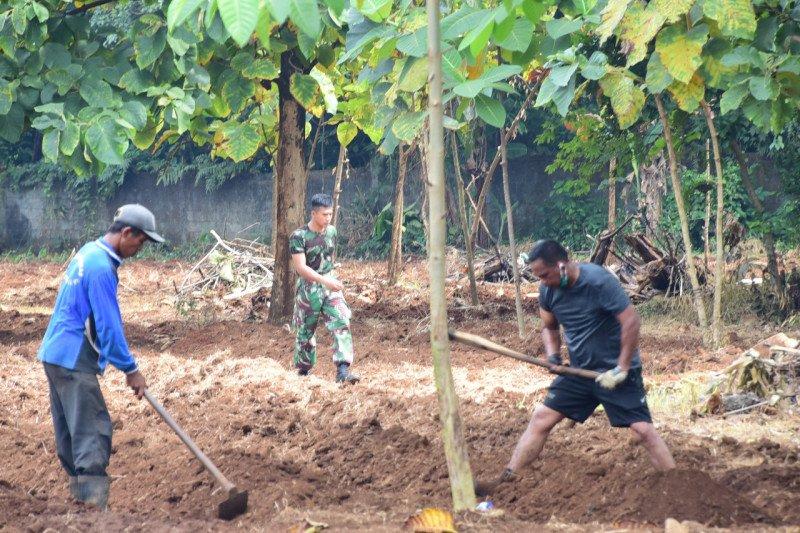 Lantamal VI siapkan lahan pembibitan sayur mayur dukung pemerintah