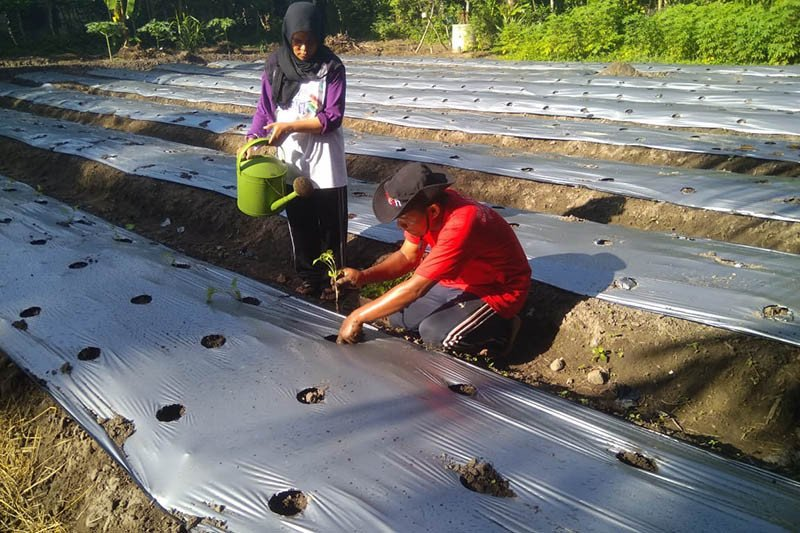 Pelaku pariwisata Aceh beralih profesi jadi petani