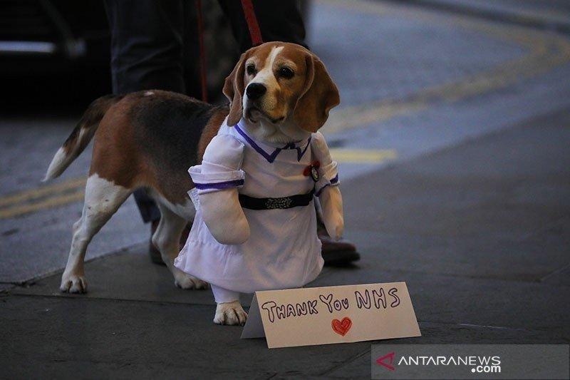 Peneliti Inggris uji kemampuan pengendusan anjing untuk deteksi virus corona