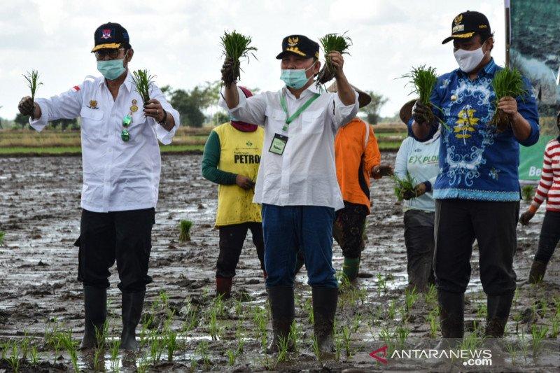 Menteri Pertanian ikuti Gerakan Tanam Padi Serentak di Kalteng