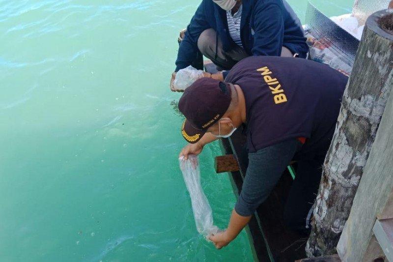 KKP lepasliarkan 44.770 benih bening lobster di Sumatera Barat