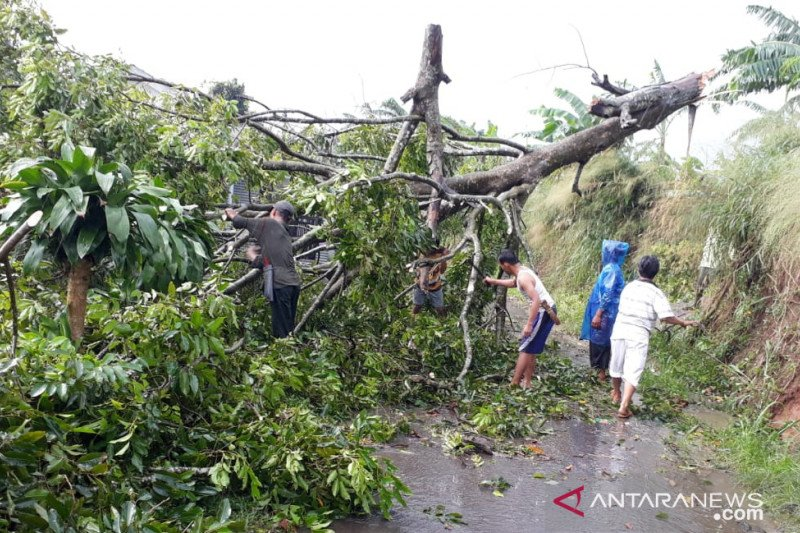 Hujan deras di Kota Bogor picu 12 bencana dalam sehari