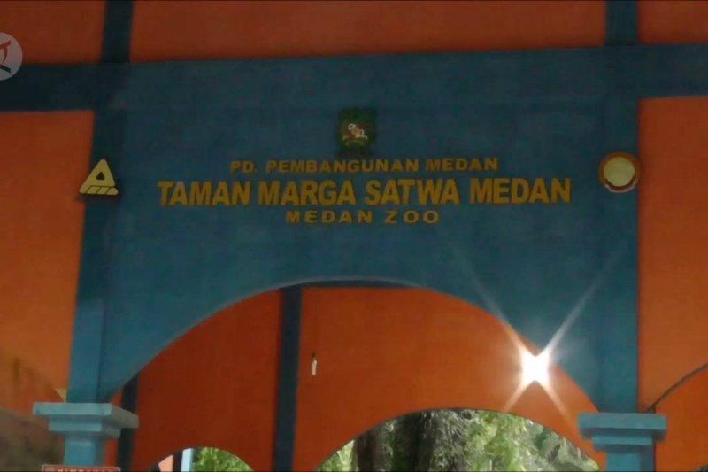 Pemkot ambil alih operasional Medan Zoo