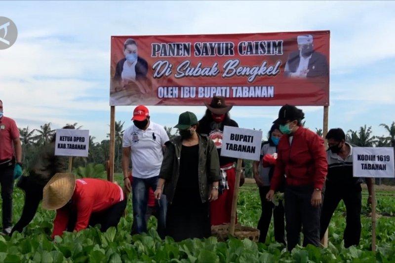 Borong hasil panen sayur demi petani