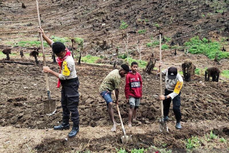 Polisi Tolikara Papua buka kebun bantu ketersediaan pangan lokal