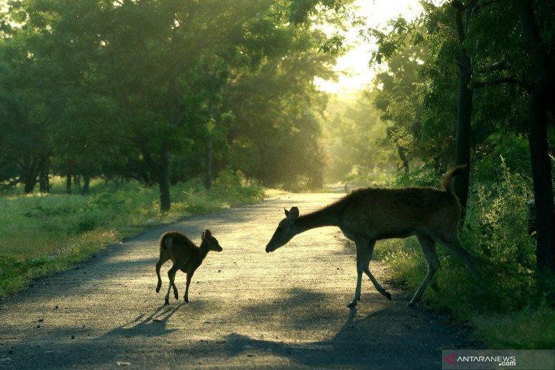 Dampak penutupan Taman Nasional Baluran