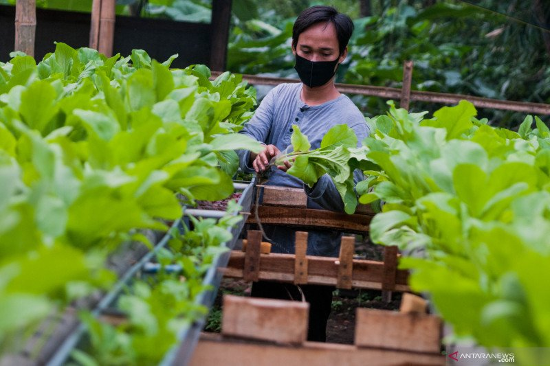 Masyarakat diajak manfaatkan pekarangan untuk tanam sayuran