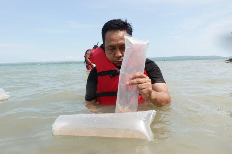 KKP lepasliarkan 43.000 benih lobster hasil pengungkapan penyelundupan