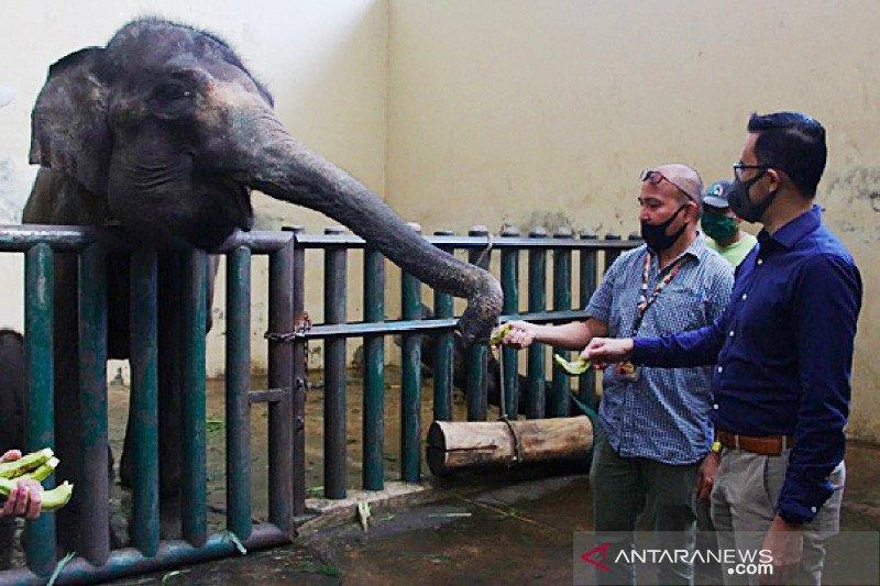Taman Safari Indonesia dapat bantuan pakan untuk satwa