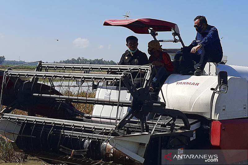 Menteri Pertanian dorong gerakan percepatannya tanam di semua daerah