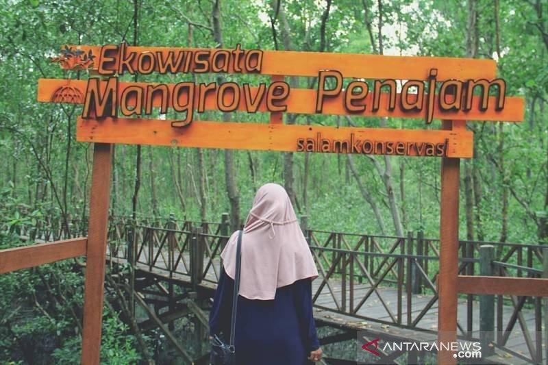 LIPI: Hutan bakau Indonesia dalam kondisi baik