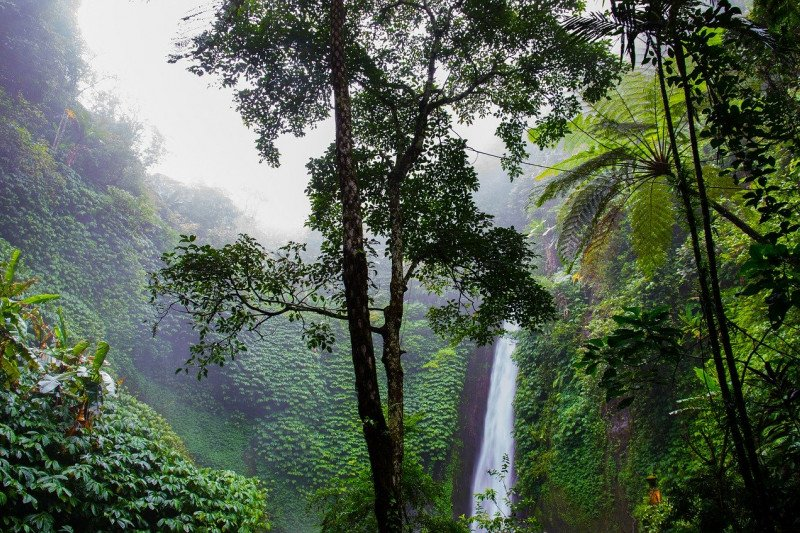 ACB: Perlindungan ekosistem hutan cegah dampak negatif perubahan iklim
