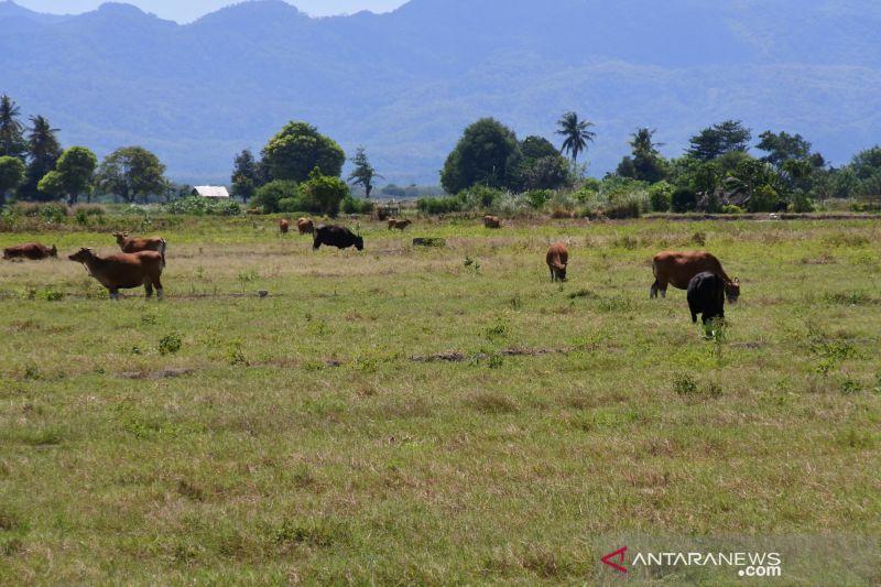 51,2 persen wilayah Indonesia telah alami musim kemarau