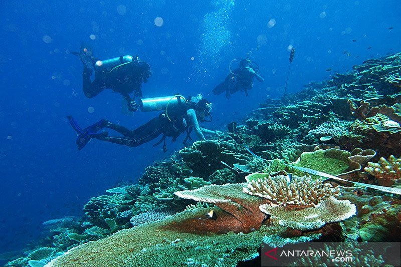 KKP inisiasi kemitraan untuk perkuat pengelolaan wisata perairan