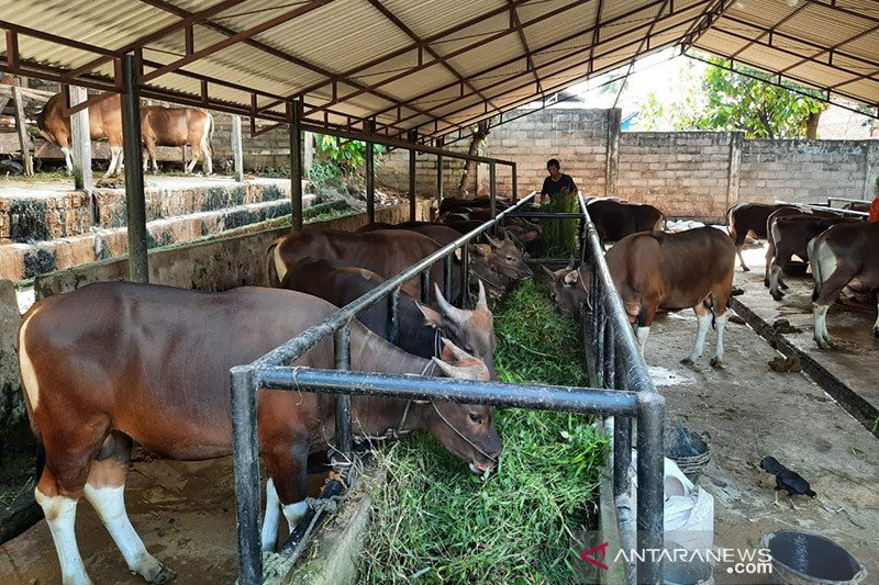 BAZNAS: Protokol COVID-19 hewan kurban sifatnya menyeluruh