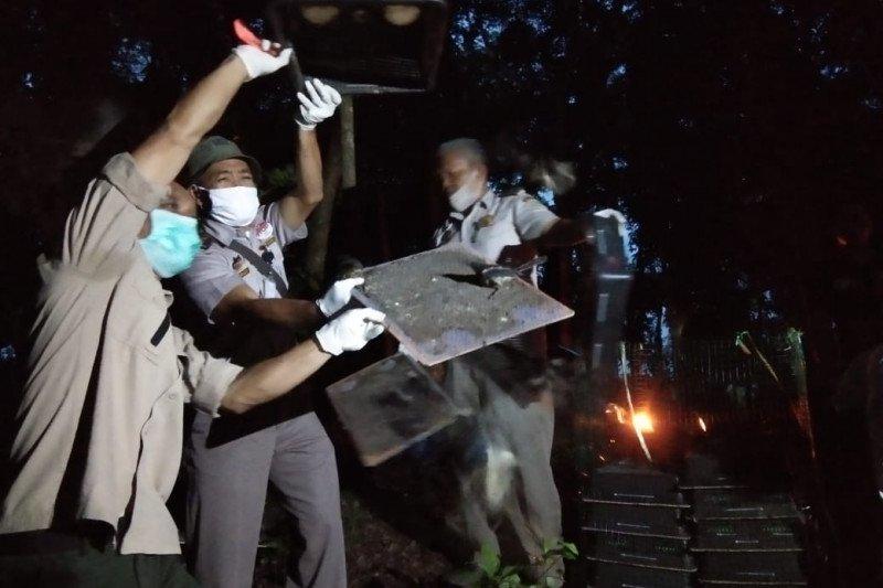 Ratusan burung kacer hasil penahanan Karantina Lampung dilepasliarkan