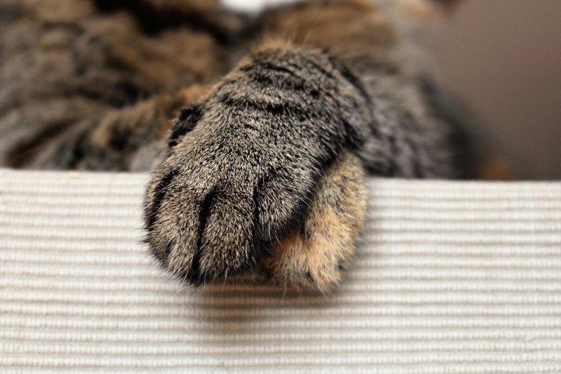 Polisi tangkap warga Kalideres bunuh kucing untuk konsumsi